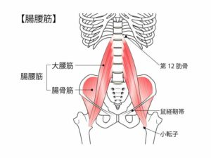 腸腰筋と骨盤のイラスト